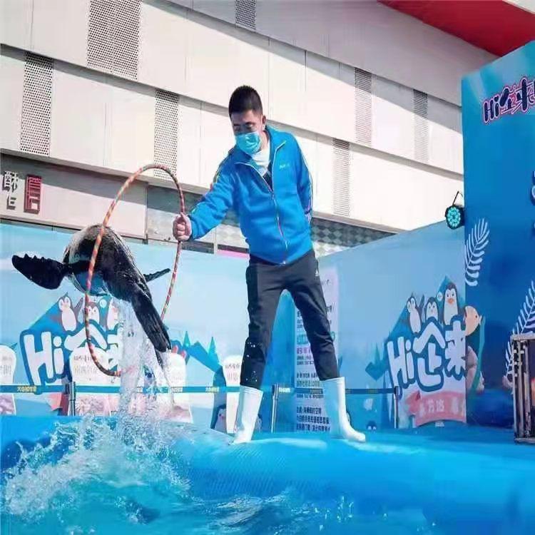 丹江口海狮表演